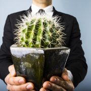 Embracing the IoT is similar to hugging a cactus.