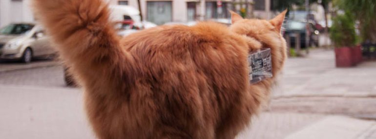 Armed with a custom collar, this cat is a mobile hotspot.
