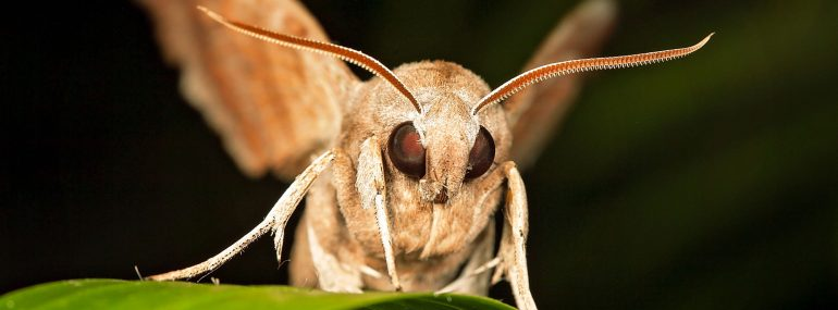 Moths can infest orchards.