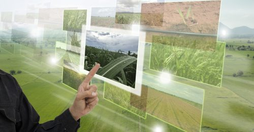 Internet of things(agriculture concept),smart farming,industrial agriculture.