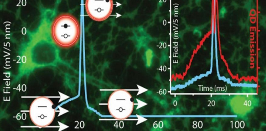 Image shows quantum dots on neurons.