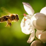 IoT in agriculture: beekeeping